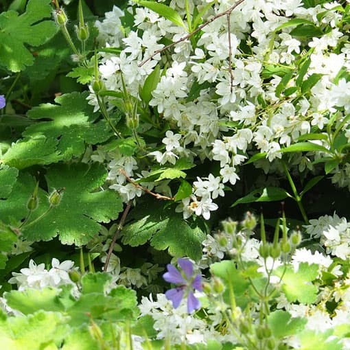 Pflanzplanung im Garten mit Fässler Freiraumplanung