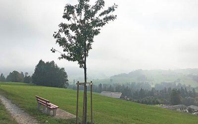 Baumpflanzung Bütschwil – In die Ferne schweifen