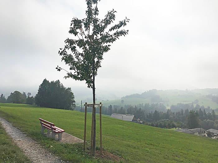 In die Ferne schweifen, Bütschwil – Baumpflanzung